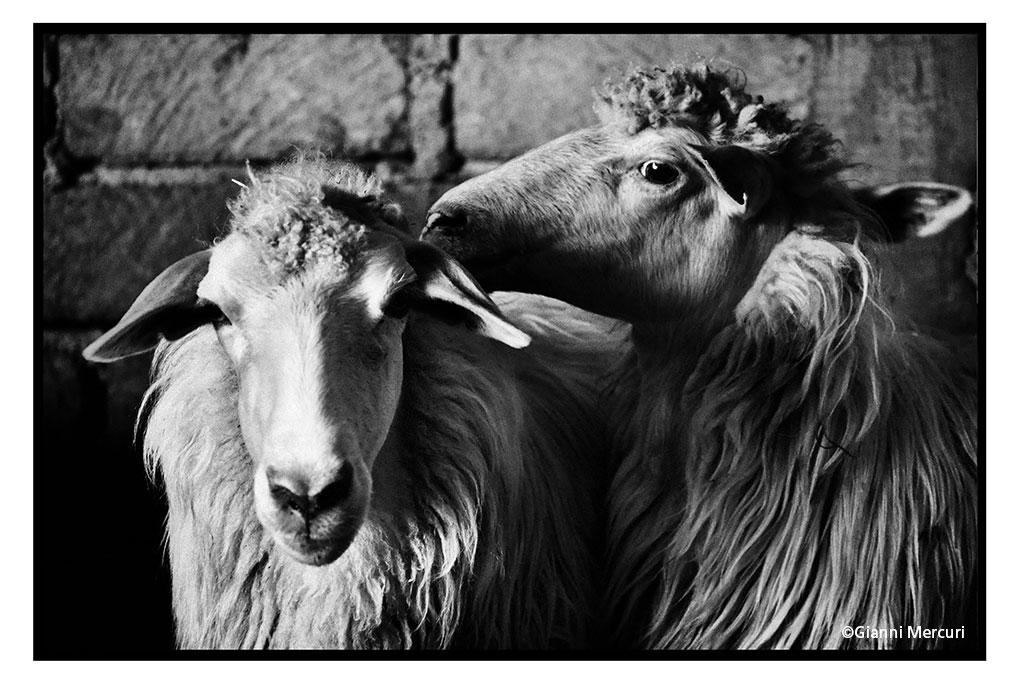 Gianni Mercuri UN BUON LAVORO …Nico e Nuzza Gianni Mercuri Diffuse Fotografia 2017 Magliano Sabina